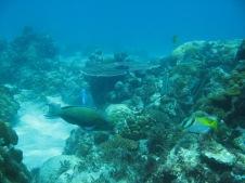 2008-04-14 PADI Open Water Diver - Pulau Aur - Malaysia (26)