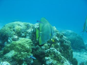 2008-04-14 PADI Open Water Diver - Pulau Aur - Malaysia (27)