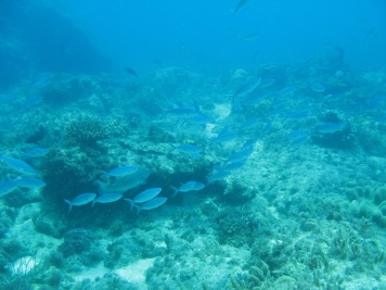 2008-04-14 PADI Open Water Diver - Pulau Aur - Malaysia (28)