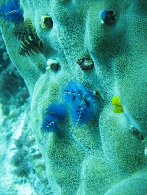 2008-04-14 PADI Open Water Diver - Pulau Aur - Malaysia (30)