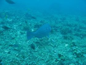 2008-04-14 PADI Open Water Diver - Pulau Aur - Malaysia (33)