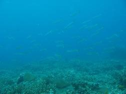 2008-04-14 PADI Open Water Diver - Pulau Aur - Malaysia (34)