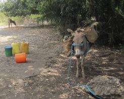 Benschilada Tansania Sansibar (31)