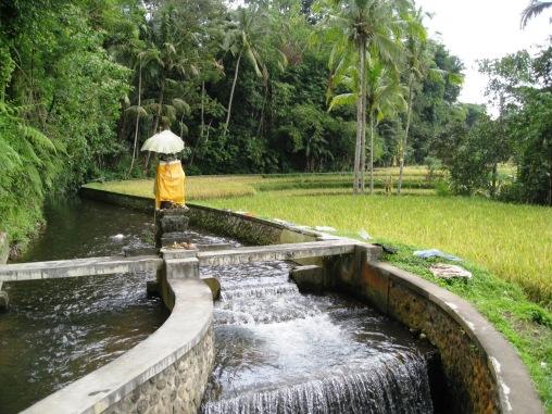 Benschilada Impressions of Bali (12)