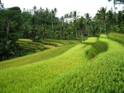 Benschilada Impressions of Bali (13)