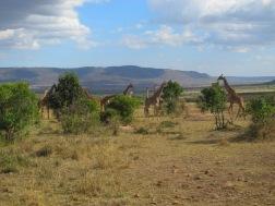 Benschilada Kenia Safari Nairobi (16)