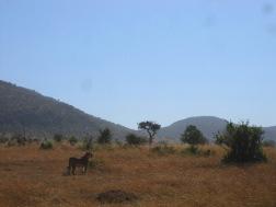 Benschilada Kenia Safari Nairobi (18)