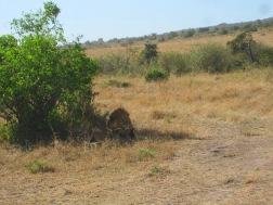 Benschilada Kenia Safari Nairobi (19)