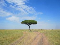 Benschilada Kenia Safari Nairobi (20)