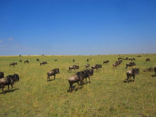 Benschilada Kenia Safari Nairobi (21)