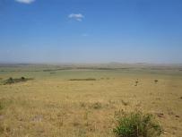 Benschilada Kenia Safari Nairobi (22)