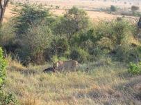 Benschilada Kenia Safari Nairobi (27)