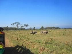 Benschilada Kenia Safari Nairobi (31)
