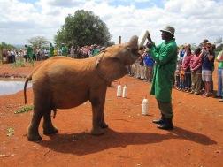 Benschilada Kenia Safari Nairobi (5)