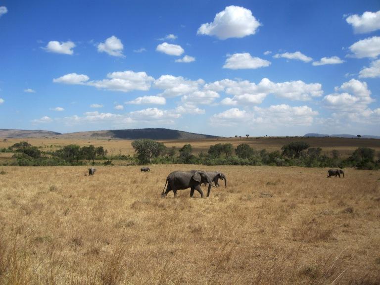 Benschilada Safari Kenia Masai Mara National Park (1)
