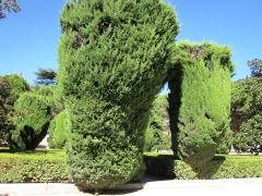 Benschilada Sightseeing Madrid (9) Jardines de Sabatini