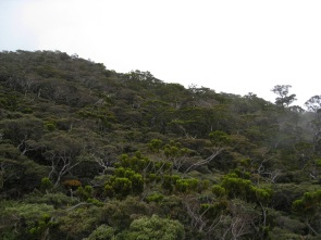Malaysia - Climbing Mount Kinabalu (10)