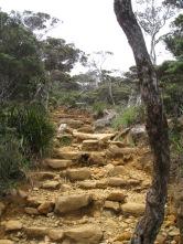 Malaysia - Climbing Mount Kinabalu (11)