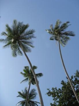 Malaysia - Pulau Perhentians - Perhentian Islands (21)