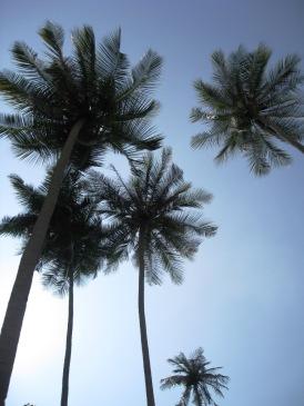 Malaysia - Pulau Perhentians - Perhentian Islands (23)