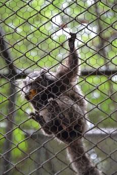 foz do iguacu (13)