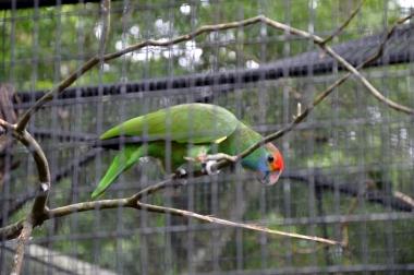 foz do iguacu (31)