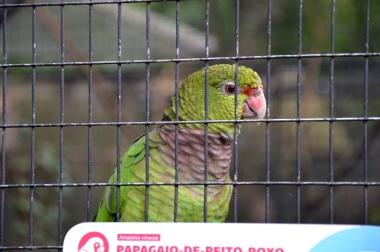 foz do iguacu (32)