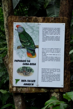 foz do iguacu (33)