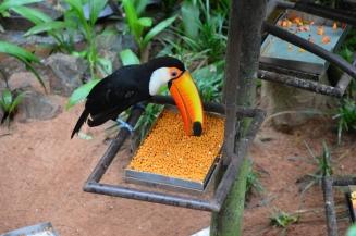 foz do iguacu (38)