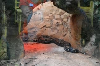 foz do iguacu (40)