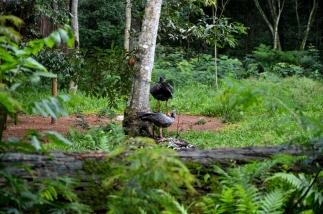 foz do iguacu (41)