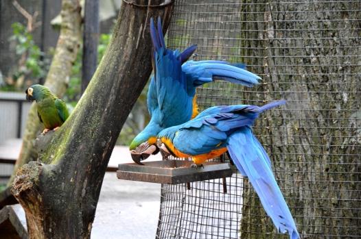 foz do iguacu (43)