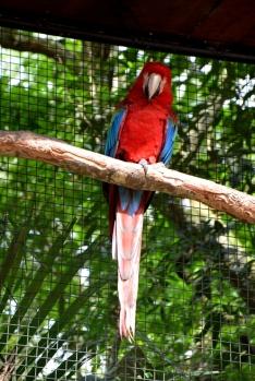 foz do iguacu (44)