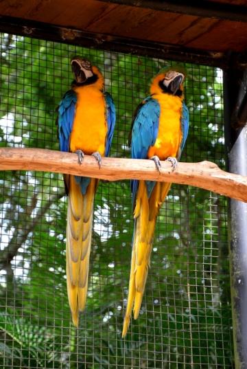 foz do iguacu (45)