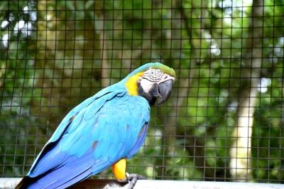 foz do iguacu (46)