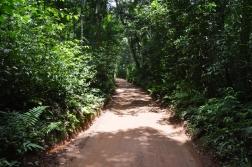 foz do iguacu (62)