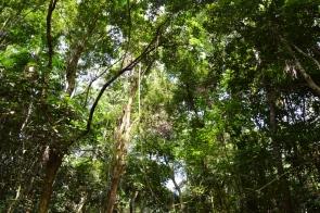 foz do iguacu (65)