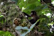 foz do iguacu (99)