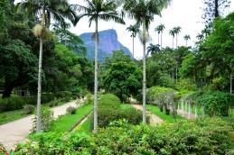Rio de Janeiro (125) - jardim botanico
