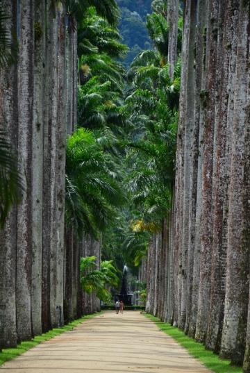 Rio de Janeiro (130) - jardim botanico