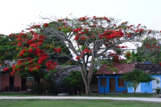 Salvador da Bahia - Trancoso (122)