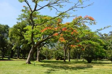 Brazil (30) Sao Paulo Parque do Ibirapuera