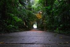 Brazil (74) Sao Paulo Parque Burle Marx