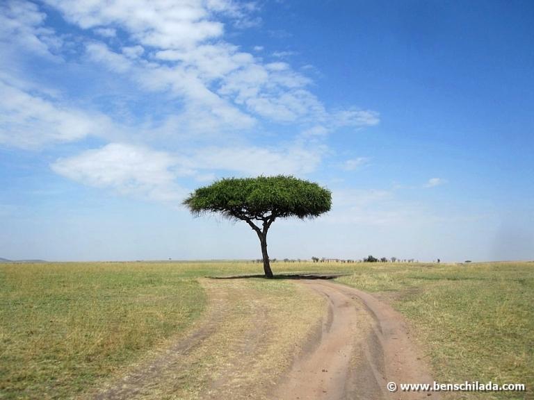 afrika-kenia-serengeti
