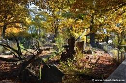 herbst-tiergarten-nuernberg-14