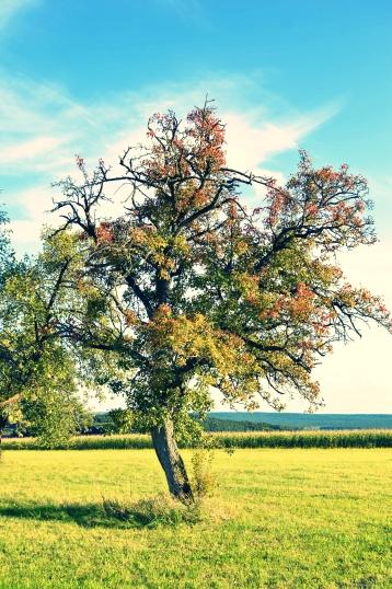 Goldener Herbst in Erlangen (7)