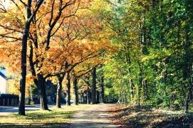 Am Waldrand_Goldener Herbst Erlangen