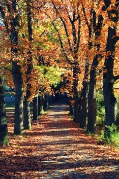 Die herbstliche Allee_Herbst Erlangen