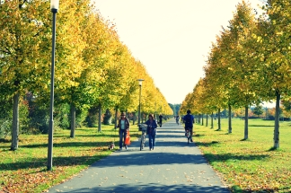 Goldener Herbst in Erlangen (3)
