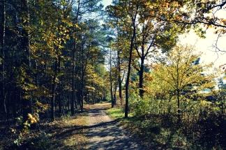 Goldener Herbst in Erlangen (4)
